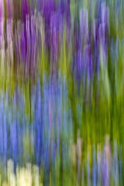 Following Monet variation 4