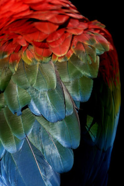 Rainbow feathers variation 3