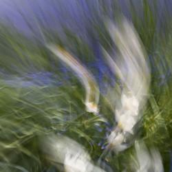 Following Monet variation 8