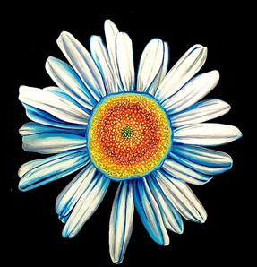 Brightest Blossom