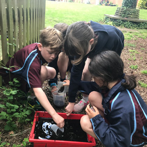 Year 4 STEM - Ditch the Dirt