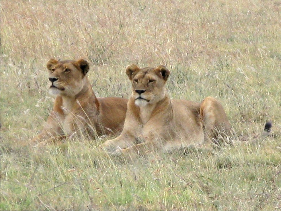 two%20lions%20IMG_3766_edited.jpg