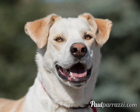 Heaven Can Wait Animal Rescue - Foothills, AB