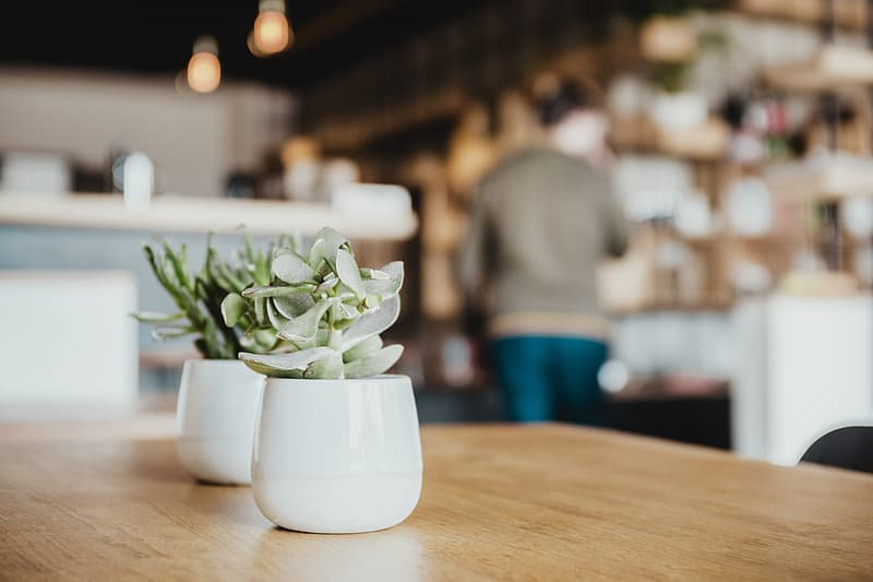 two-succulents-plants-in-white-vase-on-w