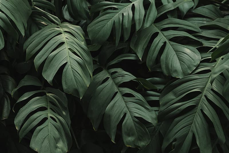 green-leaves-in-close-up-photography.jpg