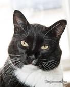 Tessa Stroke Cat 2 - Oct 16.JPG