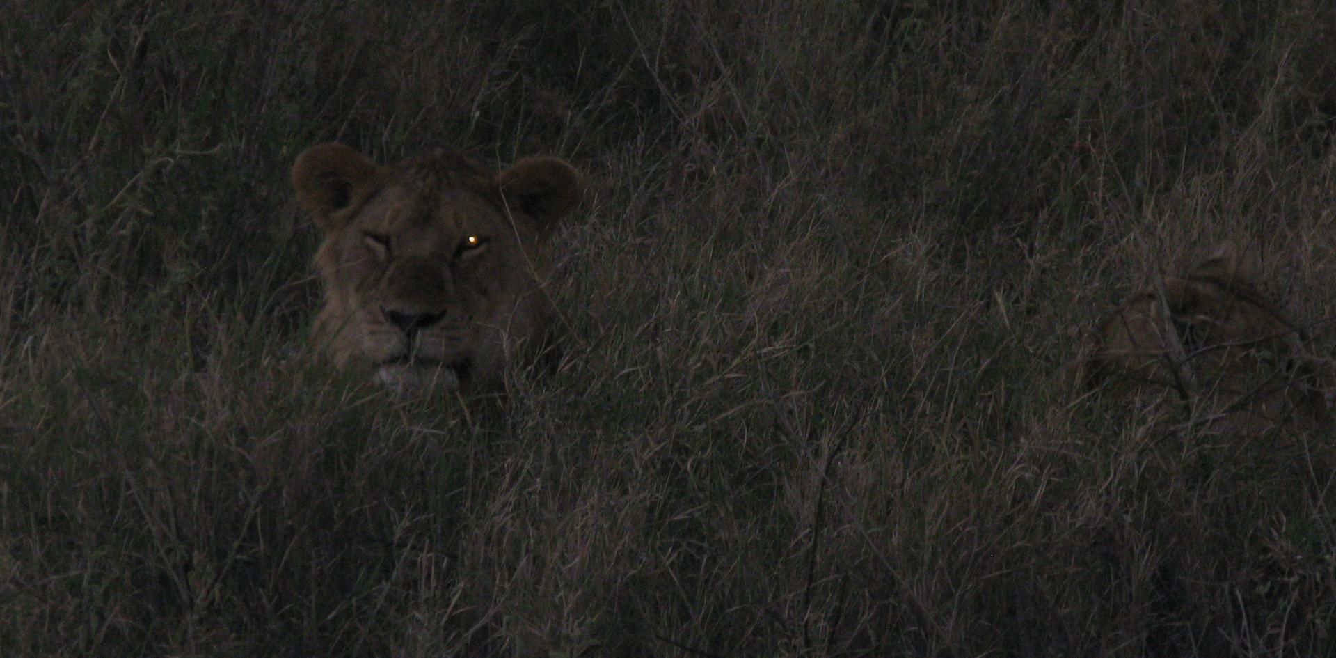 Serengeti Plains Tanzania