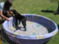 Leslie & Pup by Pool.jpg