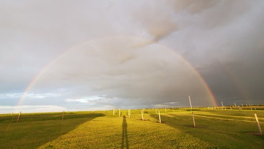 Rainbow at Kennel
