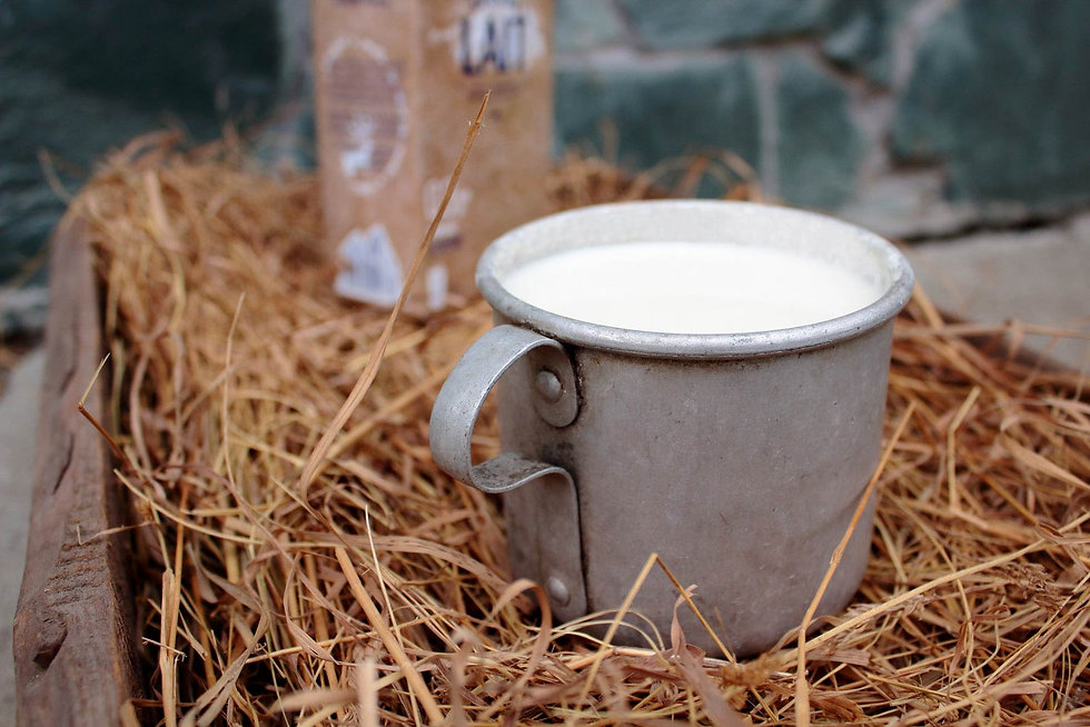 Cup of ShambaLait milk.