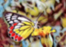 butterfly - painted.jpg
