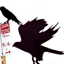 No parking birds!.jpg
