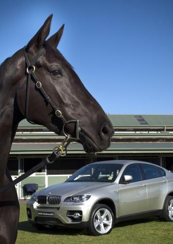 horse1 (36).jpg