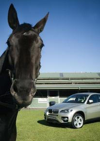 horse1 (56).jpg
