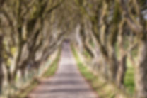 16514_The Dark Hedges.jpg