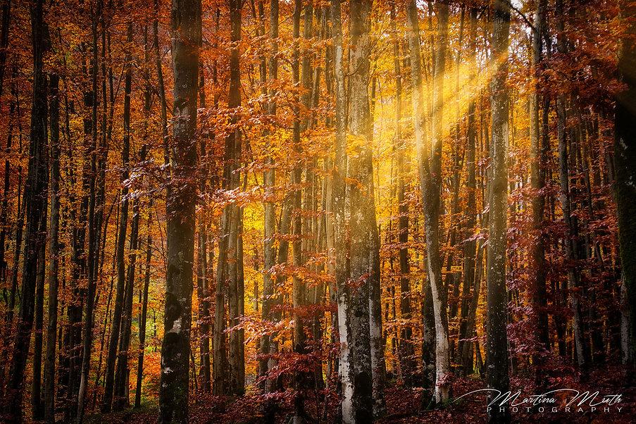 Wald bei Fontanone Di Goriuda