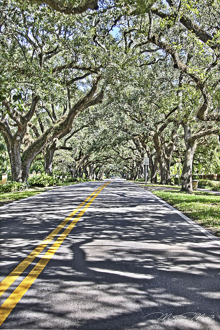 Allee in Coral Gables