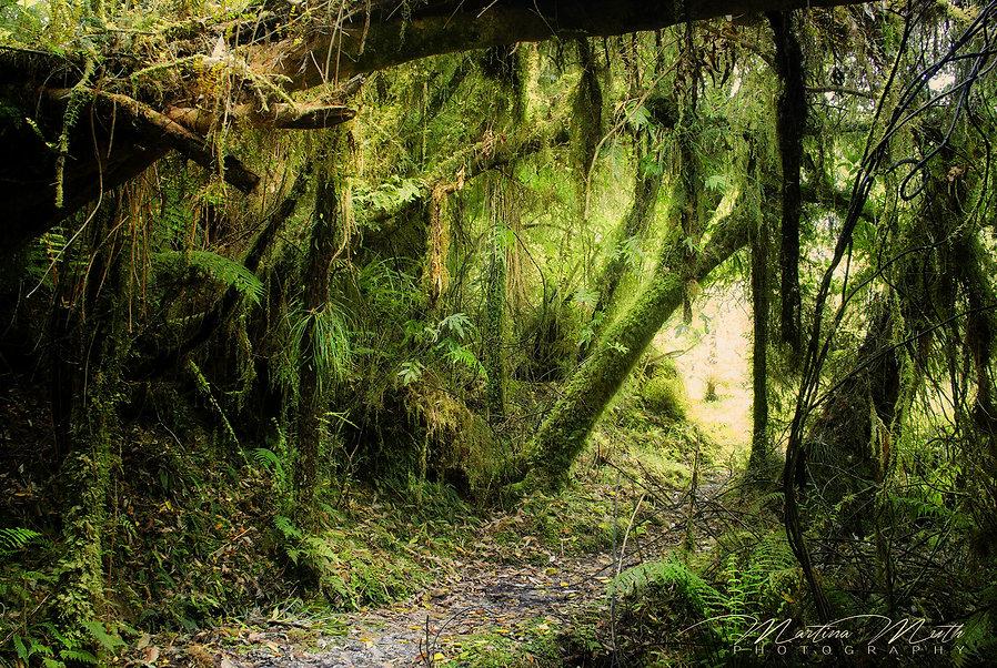 Urwald - Bullock Creek Road
