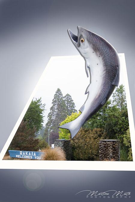 The Big Salmon in Rakaia