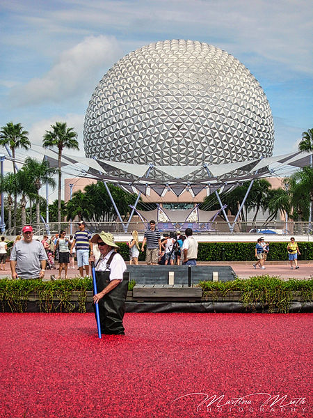 EPCOT Spaceship Earth Cranberries
