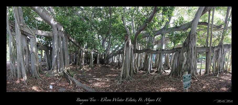 Banyan Tree Edison & Fort Winter Estate