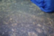 GIMG_9176-min.JPG