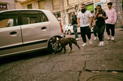Napoli's dogs.jpg