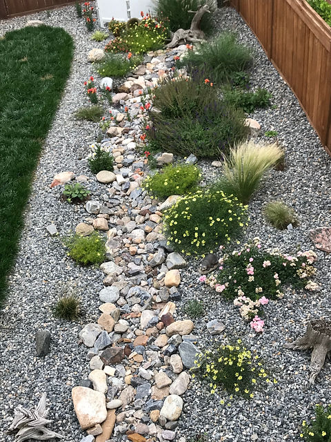 Dry river flower bed with xeriscape plan