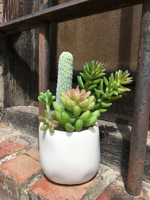 Mini Potted Cactus