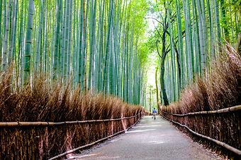 Bamboo Groves.jpg