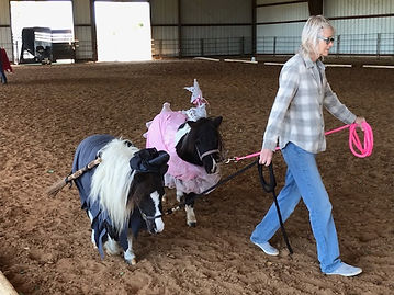 Beautiful Ponies