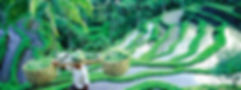 articles-first-24-hours-in-ubud-bali.jpg
