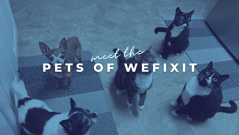 pets of wefixit.png