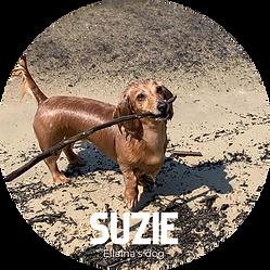 Suzie.png
