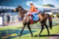 Melbourne, Malvern, Chadstone, Brighton, Caulfield, racecourse, Events, Conference, Engagement, Photographer