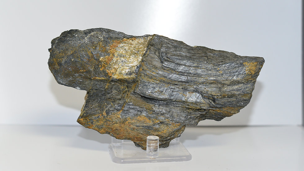 Petrified Silver Wood