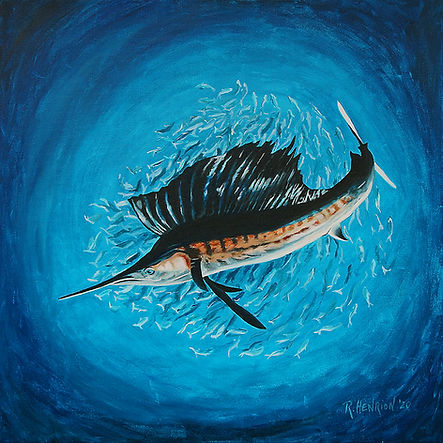 """""""Sailfish and ball of baitfish"""" painting by Roland Henrion"""