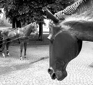 Horse meets horse, photo by Roland Henrion