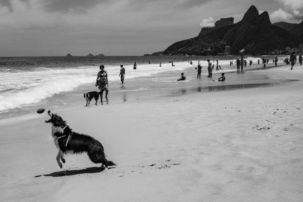 O cão de Ipanema