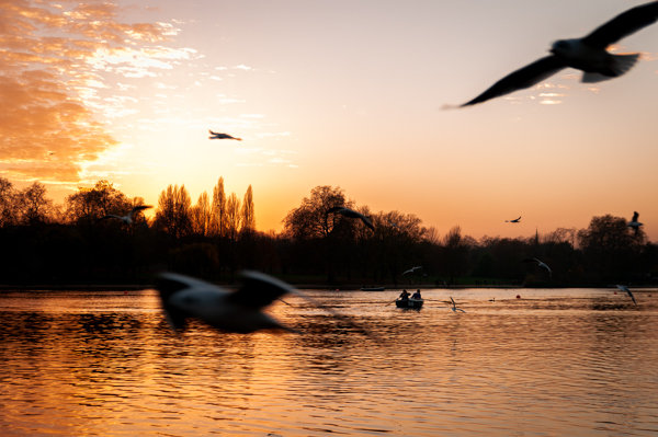 Sunset at Hyde Park II