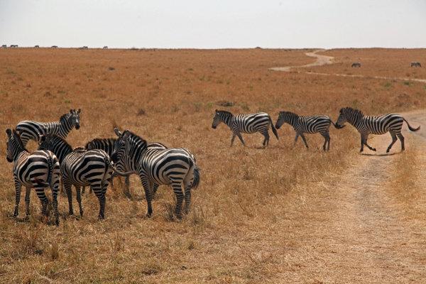 Vai dar zebra
