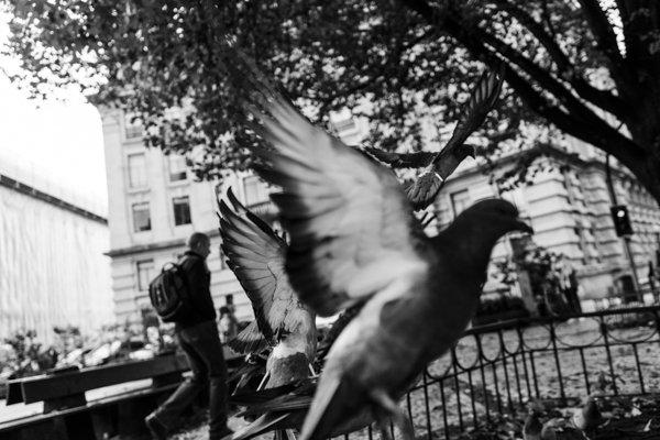 O homem e os pombos