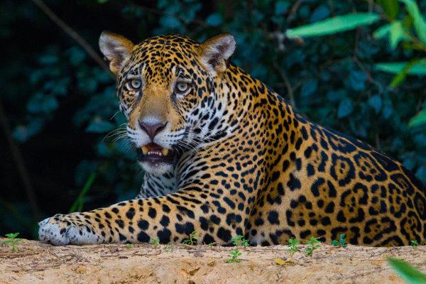 Pantanal I
