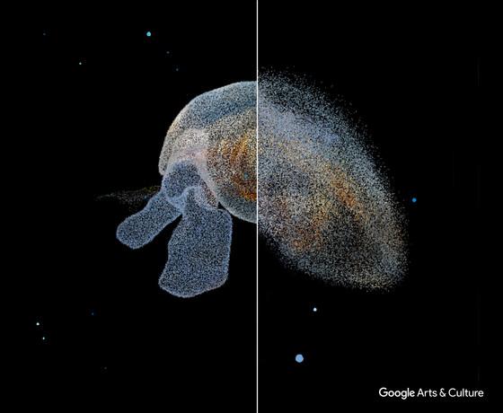 Pteropod)GAC.jpg