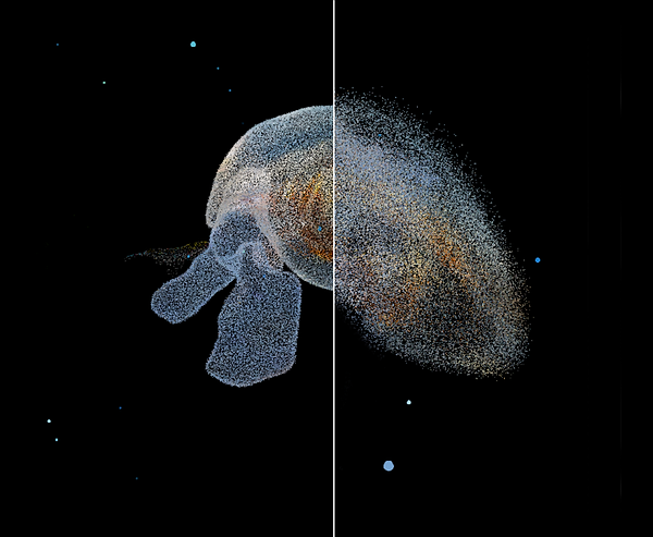 Pteropod.png
