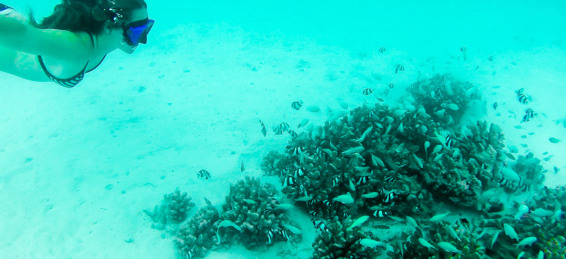 Snorkelling over coral