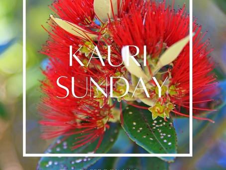 「KAURI SUNDAY」 はじまります♪