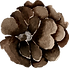 Pinecone 2.png
