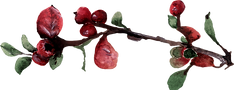 Berry%20Stem%203_edited.png