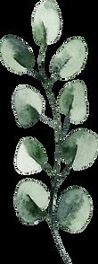 Leaf stem 27.png